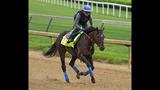 Derby 2016: 5 horses to watch in 142nd Kentucky Derby