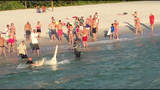 'Huge' sawfish caught, released at Fla. pier
