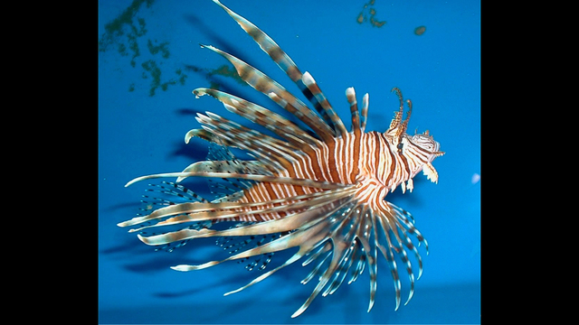 Whole Foods Lionfish Price