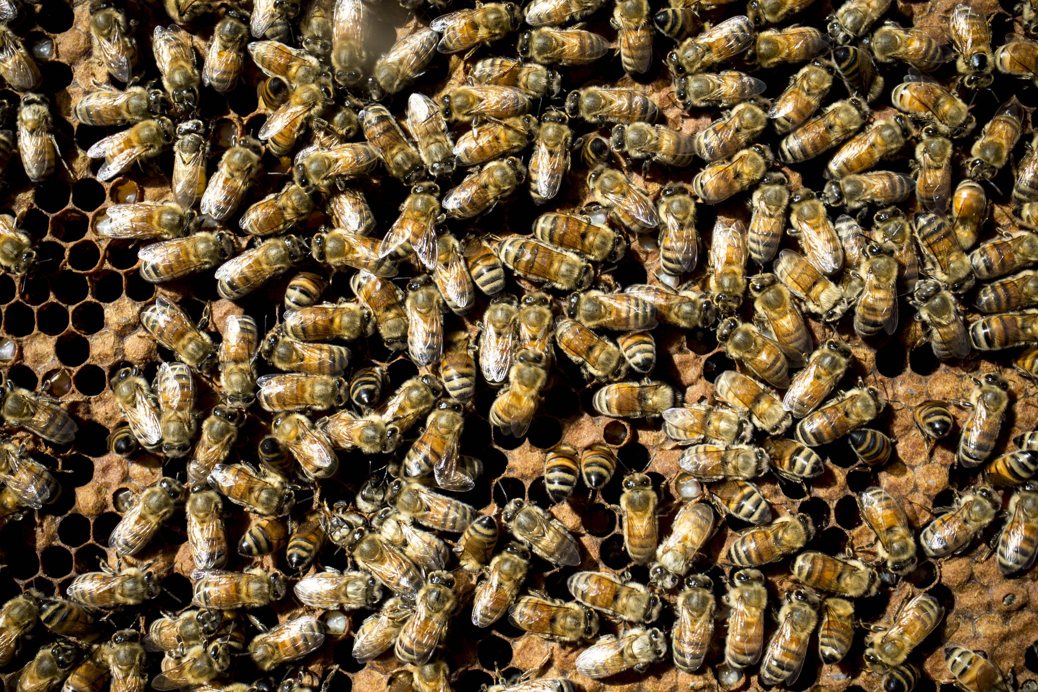 Arizona hiker killed by bees